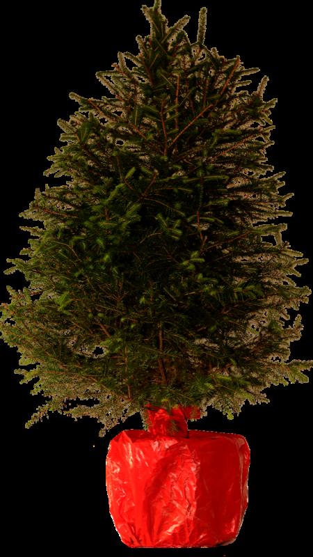 julgran i kruka med påse